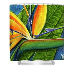 Bird Of Paradise #300b Shower Curtain by Donald k Hall