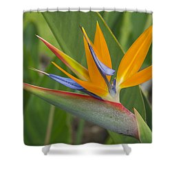 Shower Curtain featuring the photograph Bird Of Paradise by Christina Lihani