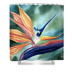 Bird Of Paradise Shower Curtain by Deborah Ronglien