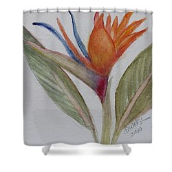 Shower Curtain featuring the painting Bird Of Paradise by Donna Walsh