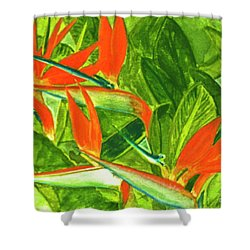 Bird Of Paradise Flower #55 Shower Curtain by Donald k Hall