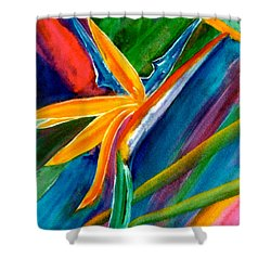 Bird Of Paradise Flower #66 Shower Curtain by Donald k Hall