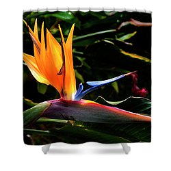 Bird Of Paradise Flower Shower Curtain by Brian Harig