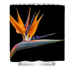 Shower Curtain featuring the photograph Bird Of Paradise Flower On Black by Rikk Flohr
