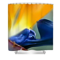 Bird-of-paradise Shower Curtain by Heiko Koehrer-Wagner