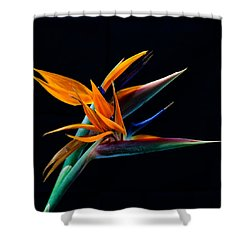 Bird Of Paradise Shower Curtain by James Roemmling