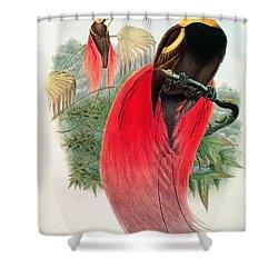 Bird Of Paradise Shower Curtain by John Gould