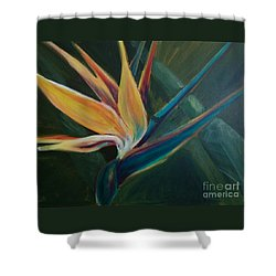 Shower Curtain featuring the painting Bird Of Paradise by Lisa DuBois