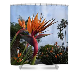Bird Of Paradise Peace And Joy Shower Curtain