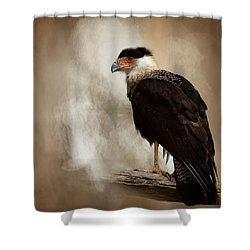 Bird Of Prey Shower Curtain by Cyndy Doty