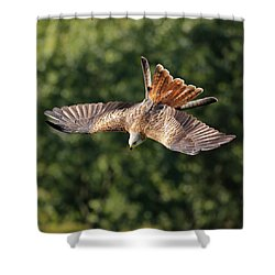 Shower Curtain featuring the photograph Bird Of Prey Diving by Grant Glendinning