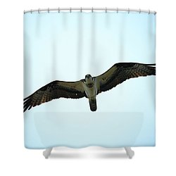 Bird Of Prey Shower Curtain