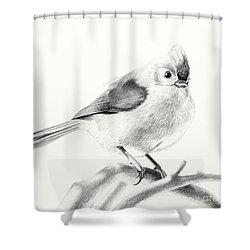 Shower Curtain featuring the drawing Bird On A Branch by Eleonora Perlic