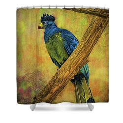 Bird On A Branch Shower Curtain