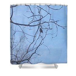 Shower Curtain featuring the photograph Bird On A Limb by Jewel Hengen