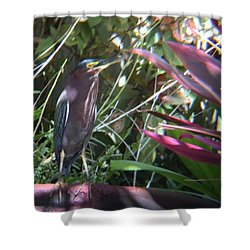 Bird On Bath Shower Curtain