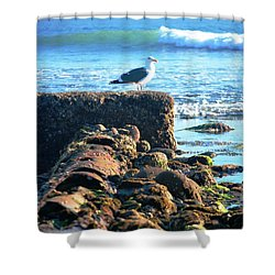 Bird On Perch At Beach Shower Curtain by Matt Harang