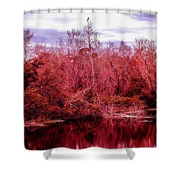 Shower Curtain featuring the photograph Bird Out On A Limb 2 by Madeline Ellis