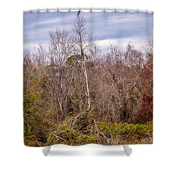 Shower Curtain featuring the photograph Bird Out On A Limb 3 by Madeline Ellis