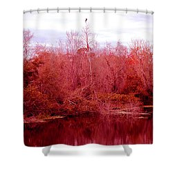 Shower Curtain featuring the photograph Bird Out On A Limb by Madeline Ellis