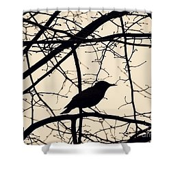 Bird Silhouette Shower Curtain by Sarah Loft