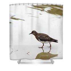 Shower Curtain featuring the photograph Bird Walking On Beach by Mariola Bitner