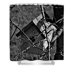 Birdhouse In Tree Shower Curtain