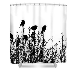 Birdies Shower Curtain