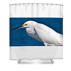 Birds 11 17 Shower Curtain