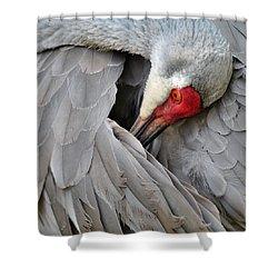 Birds 2 17b Shower Curtain