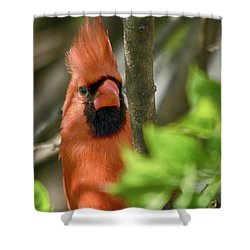 Bird's Eye Shower Curtain