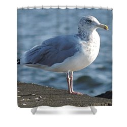 Birds In The Air  Shower Curtain