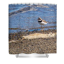 Birds Of Maine Shower Curtain by Trace Kittrell