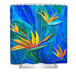 Birds Of Paradise In Florida Shower Curtain