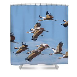Birds Of The Same Feather. Shower Curtain