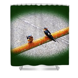 Birds On A Pipe Shower Curtain by Angi Parks