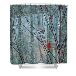 Birds On A Snowy Day Shower Curtain