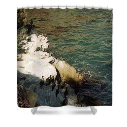 Birds On Rock Above Pacific Ocean Shower Curtain by Ted Pollard