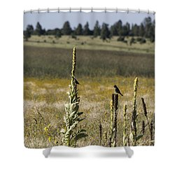 Shower Curtain featuring the photograph Birds On Stands by Laura Pratt