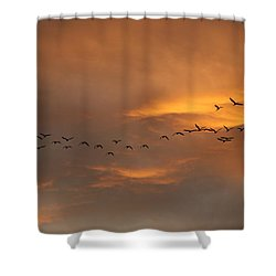Birds Over San Miguel De Allende Shower Curtain by John  Kolenberg