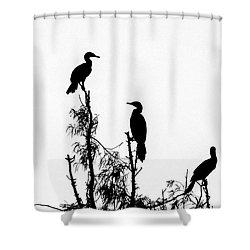 Birds Perched On Branches Shower Curtain