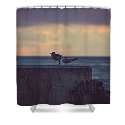 Birds Shower Curtain by Scott Meyer