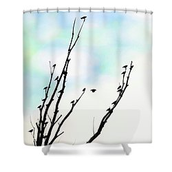 Shower Curtain featuring the photograph Birds Silhouette In Tree Blue by Jennie Marie Schell