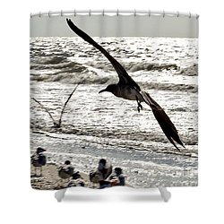 Birds World Shower Curtain