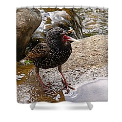Birdsong Shower Curtain by Rona Black