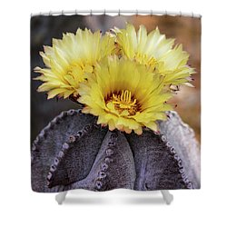 Shower Curtain featuring the photograph Bishop's Cap Cactus  by Saija Lehtonen