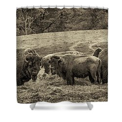 Shower Curtain featuring the photograph Bison 1 - Pano by Joye Ardyn Durham