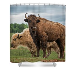 Shower Curtain featuring the photograph Bison 10 by Joye Ardyn Durham
