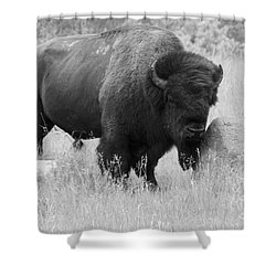 Bison And Buffalo Shower Curtain by Mary Mikawoz