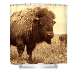 Bison And Calf Shower Curtain